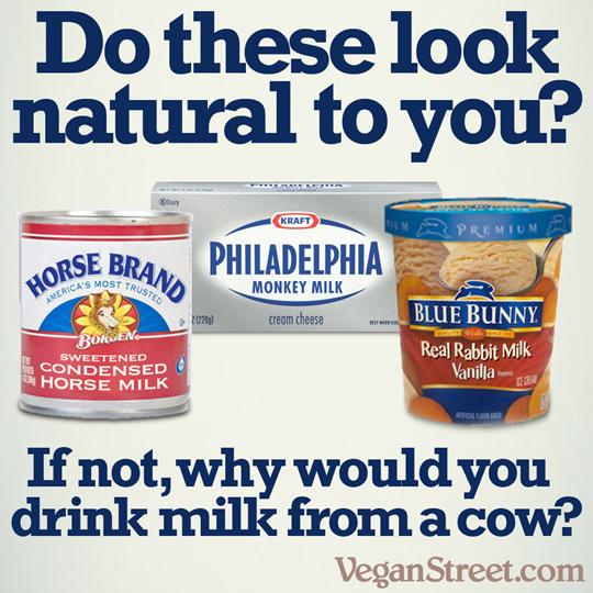 Do Baby Rabbits Drink Cow Milk